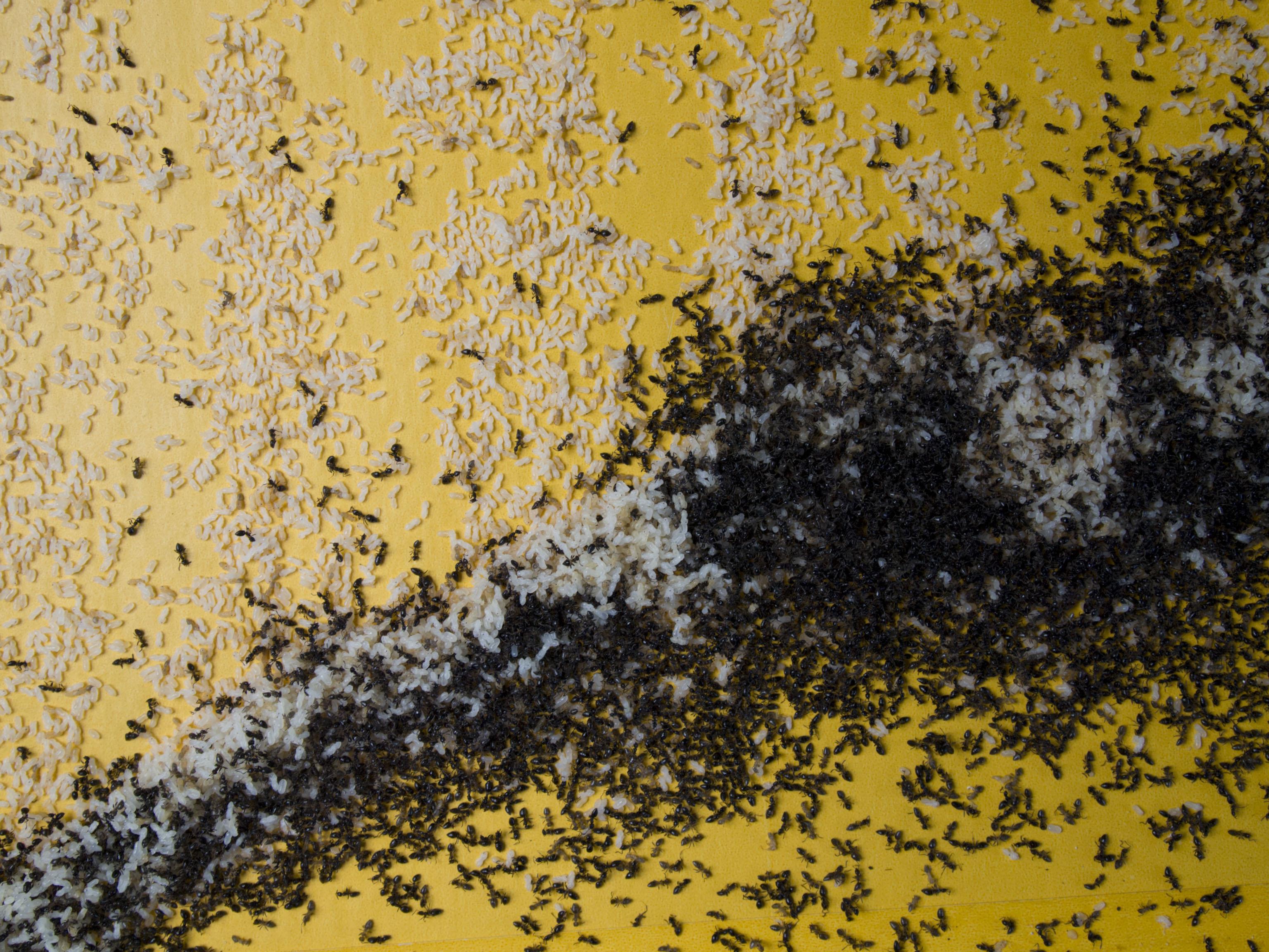 Ants In The Studio Centre For Regional Arts Practice