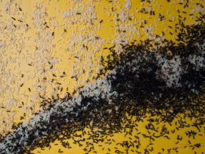 Ants and eggs killed by spray