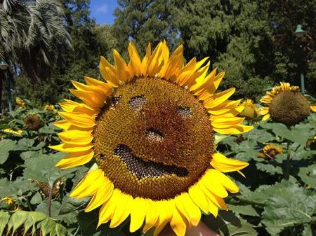 __SunflowerMan2